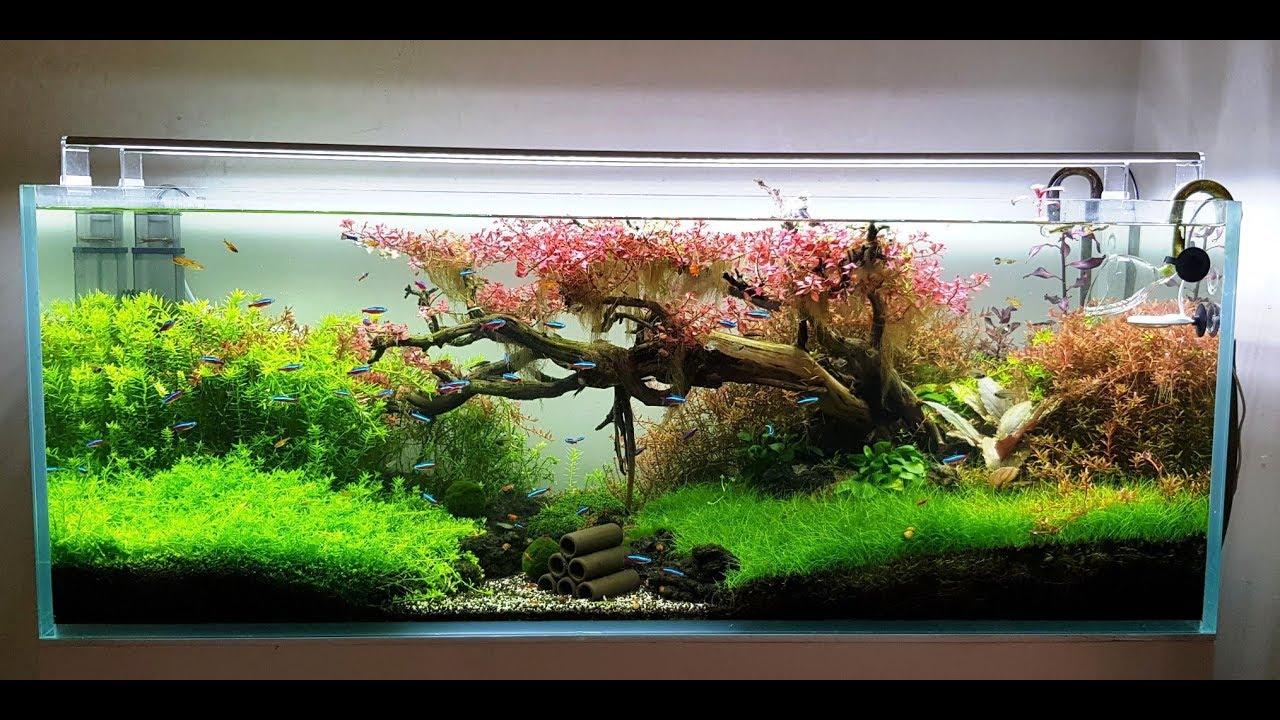 fish tank remain